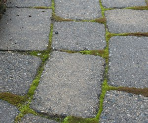 Pavers with moss growing between the joints.