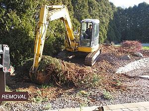 Removal of Shrubs Backyard Transformation