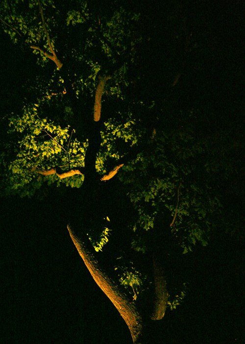 up lighting used to enlighten the structure of the tree.