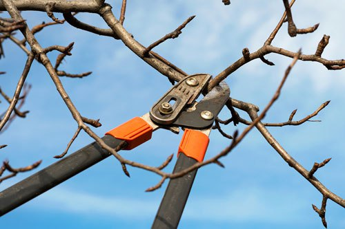 proper-pruning-techniques-trees